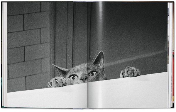 9783836573856 Cats