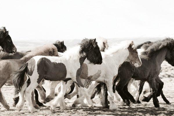 9783961711956 Horses of Iceland Laiz Guadalupe