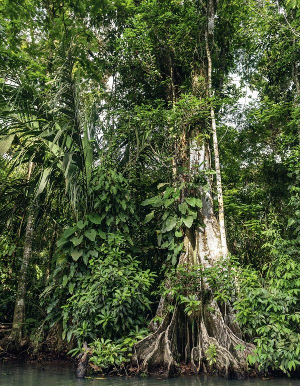 9783961712182 Forests in our World How the Cimate Affects Woodlands