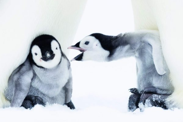 9783961712892 Penguin - A story of Survival