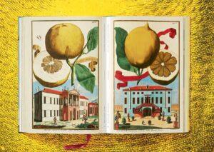 9783836535250 Johann Christoph Volkamer. Citrus Fruits