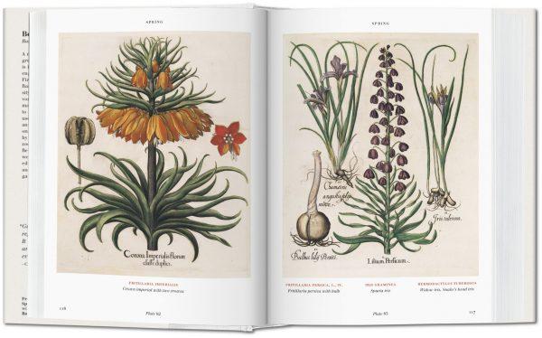 9783836557870 Basilius Besler's Florilegium. The Book of Plants